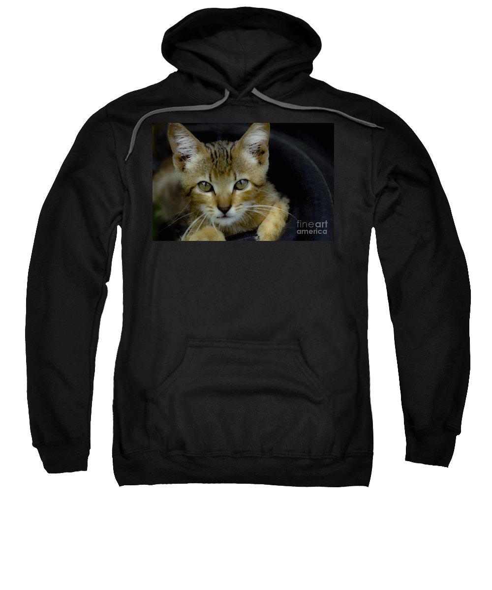 Beautiful Kittens Sweatshirt featuring the mixed media Born Wild by Kim Henderson