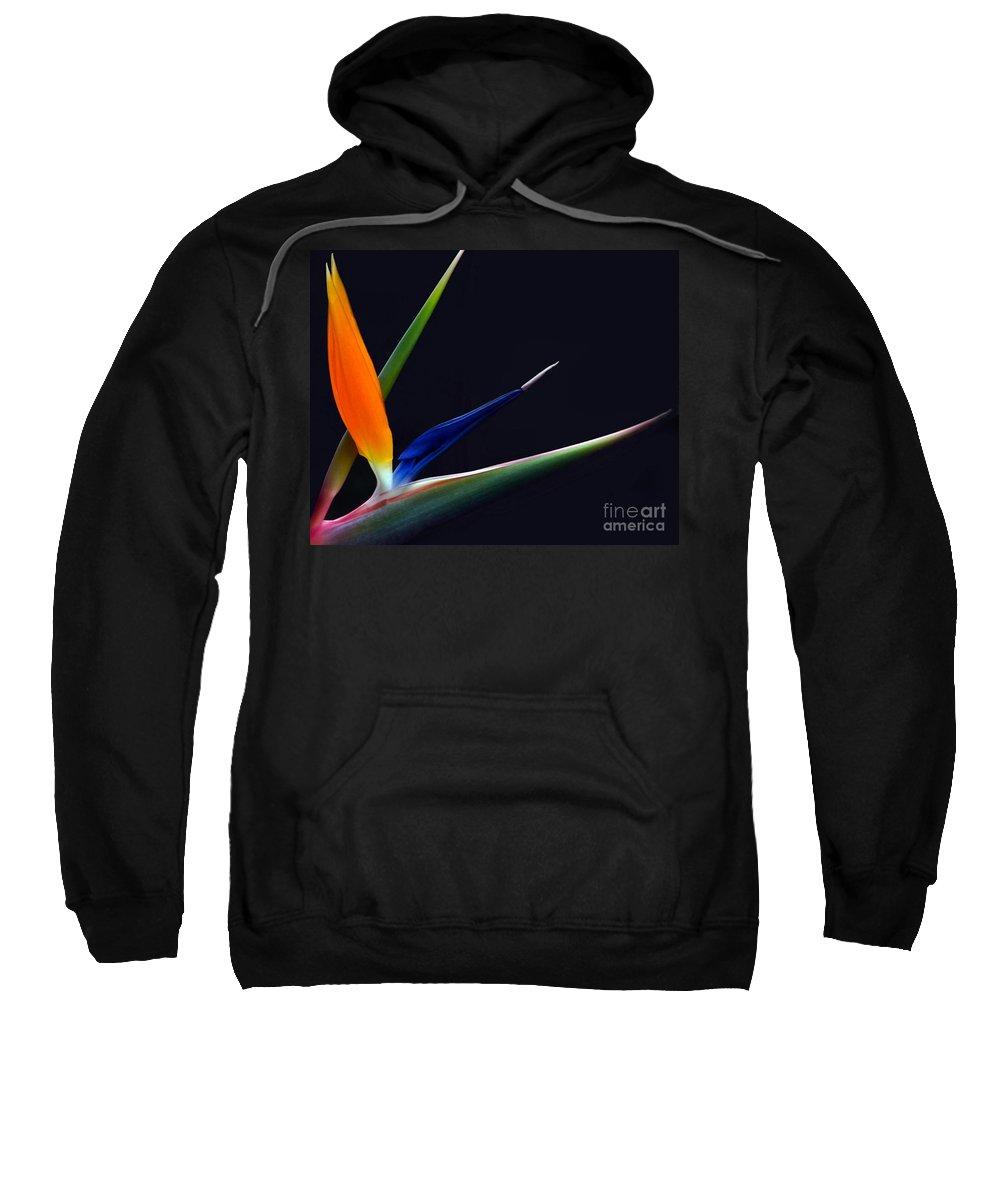 Strelitzia Sweatshirt featuring the photograph Bright Bird Of Paradise Rectangle Frame by Byron Varvarigos