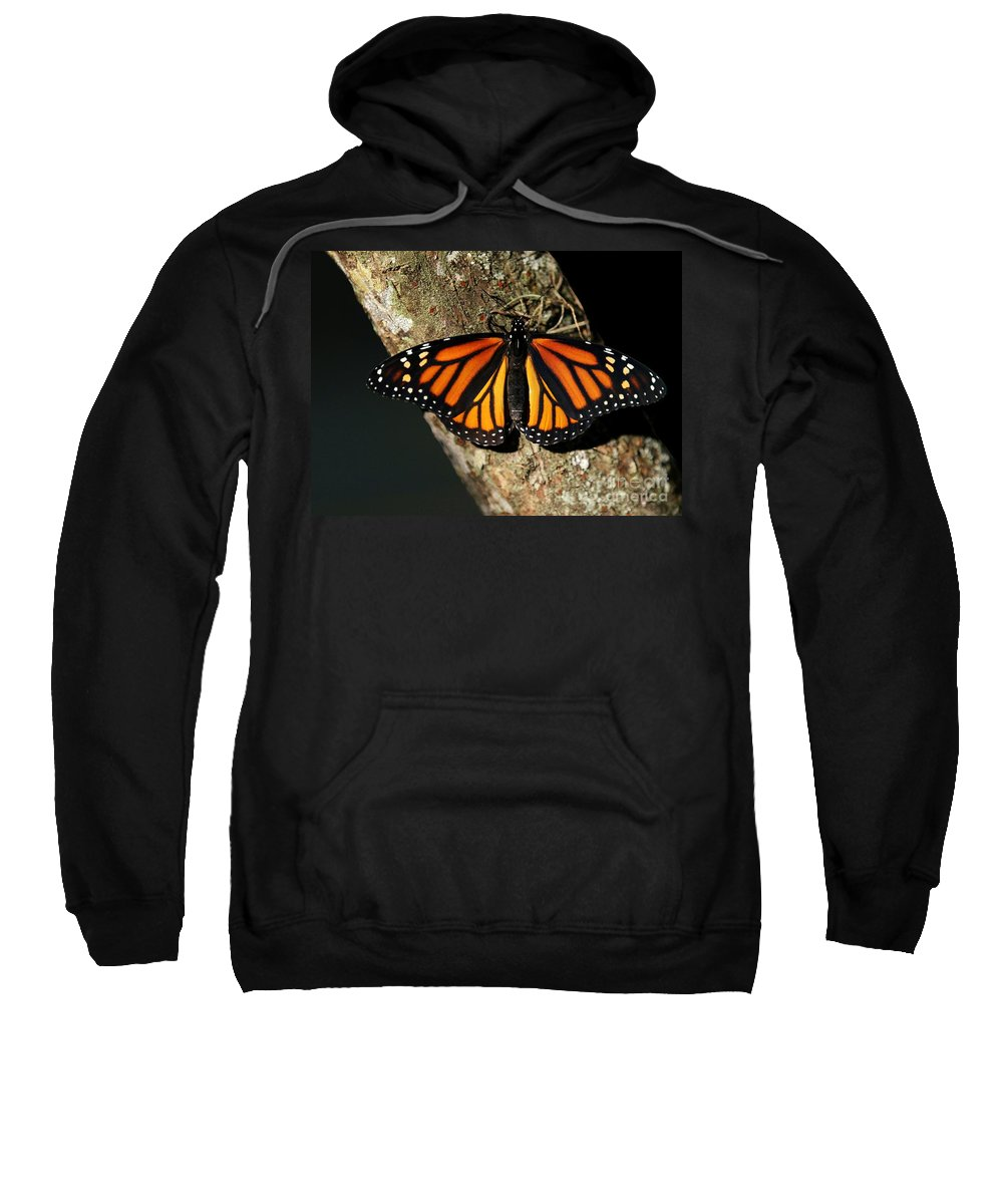 Butterfly Sweatshirt featuring the photograph Bright Orange Monarch Butterfly by Sabrina L Ryan