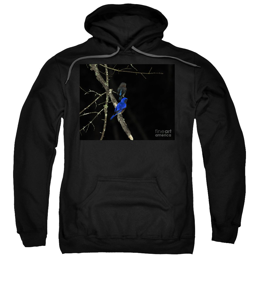 Eastern Bluebird Sweatshirt featuring the photograph Brilliant Blues by Al Powell Photography USA