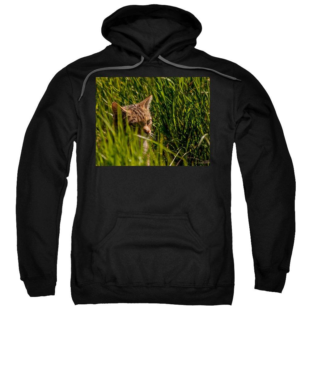 British Wildcat Sweatshirt featuring the photograph British Wild Cat by Dawn OConnor