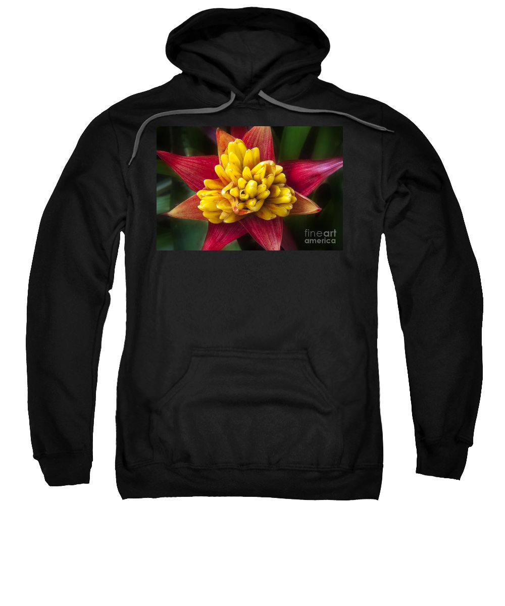 Bromiliad Sweatshirt featuring the photograph Bromiliad Blossom by Darleen Stry