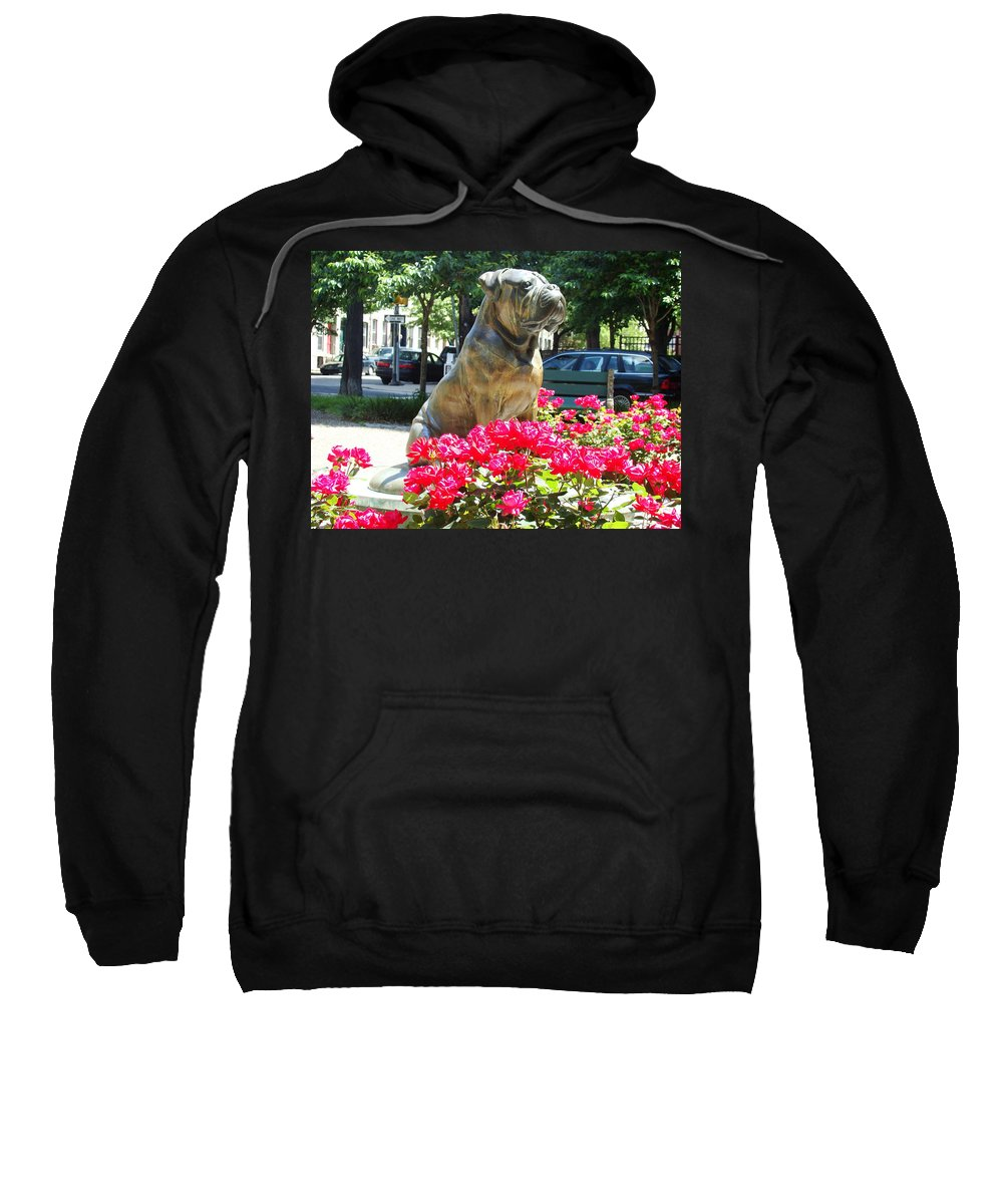 Dog Statue The Philadelphian On The Parkway Park Roses Red Philadelphia Pennsylvania Sweatshirt featuring the photograph Bud by Alice Gipson