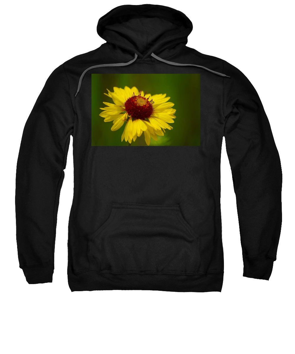 Flower Sweatshirt featuring the photograph Bugged by John Greaves