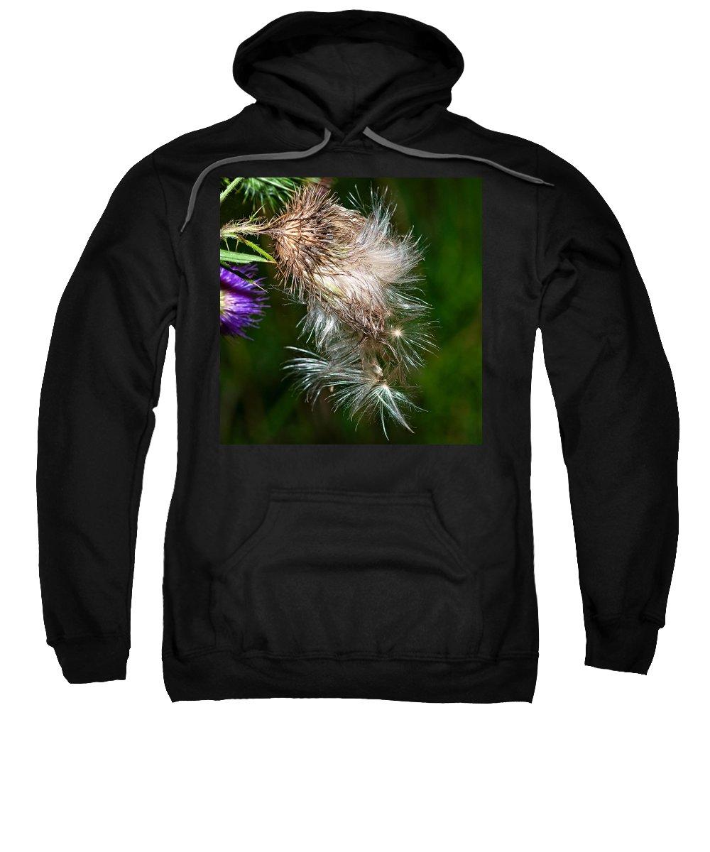 Flowers Sweatshirt featuring the photograph Bull Thistle by Steve Harrington