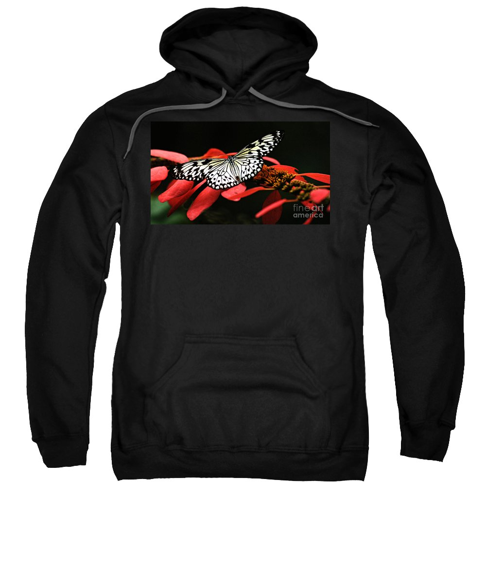 Butterfly Sweatshirt featuring the photograph Butterfly On Red by Bob Christopher
