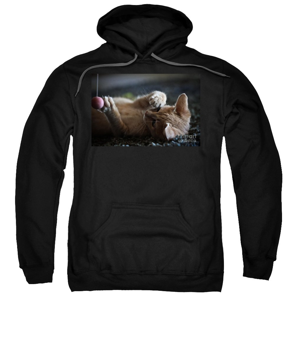 Kittens Sweatshirt featuring the photograph Can't Stop Spinning by Kim Henderson