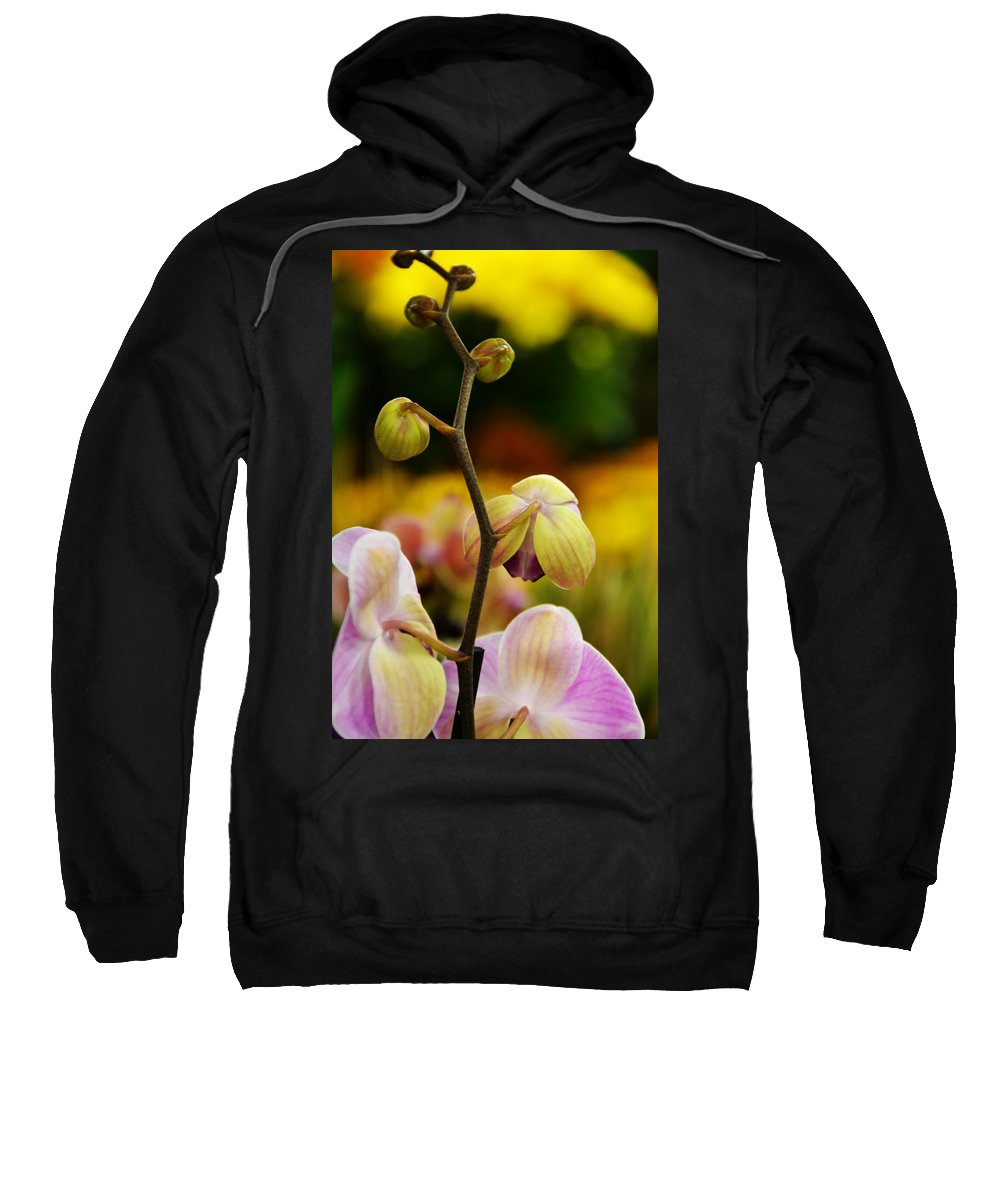Flowers Sweatshirt featuring the photograph Climbing Slowly by Angelina Vick