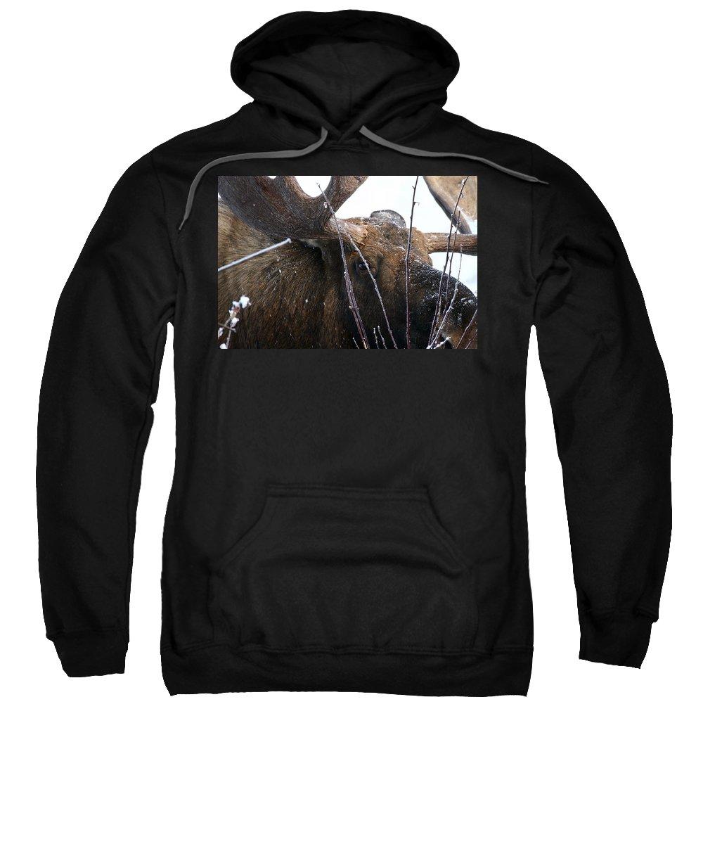 Alaska Sweatshirt featuring the photograph Close by Doug Lloyd