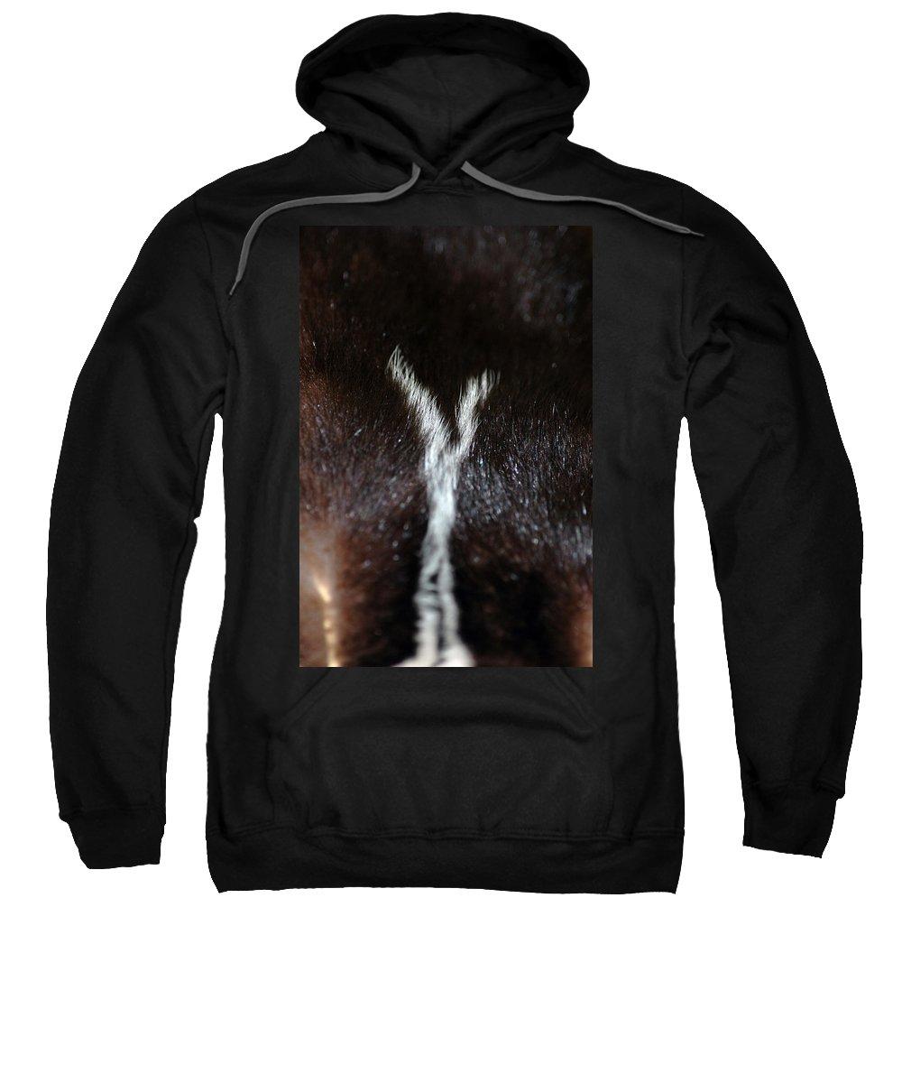 Usa Sweatshirt featuring the photograph Close Skunk Encounter by LeeAnn McLaneGoetz McLaneGoetzStudioLLCcom