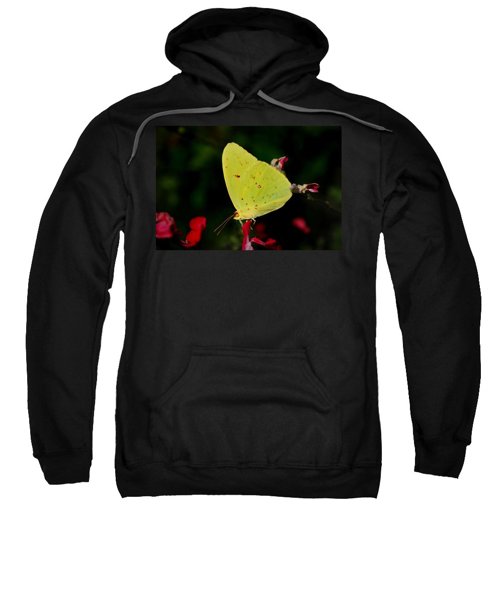 Sulphur Sweatshirt featuring the photograph Cloudless Sulphur by Skip Willits
