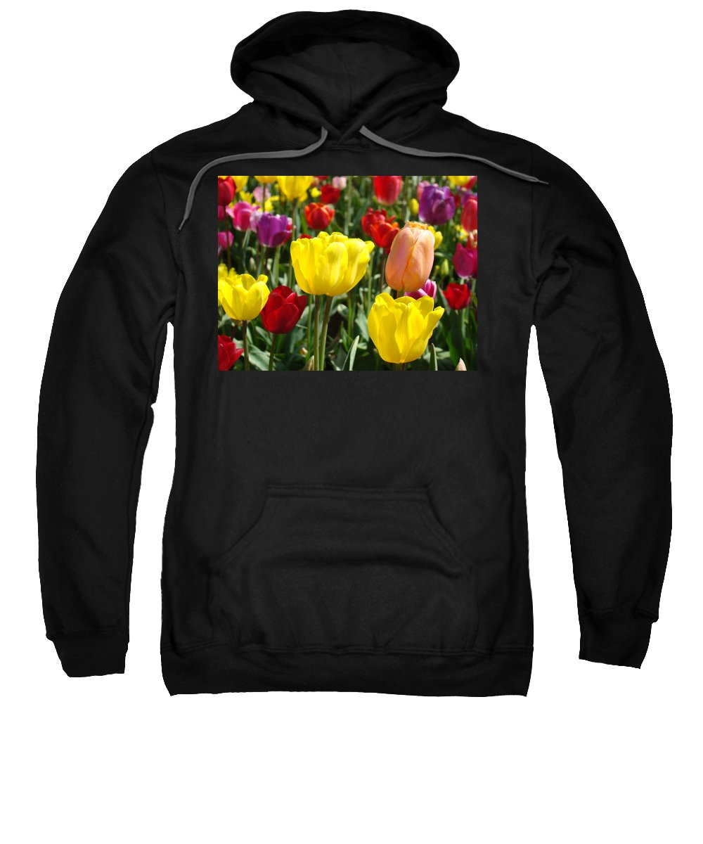 Tulip Sweatshirt featuring the photograph Colorful Bright Tulip Flowers Field Tulips Floral Art Prints by Baslee Troutman