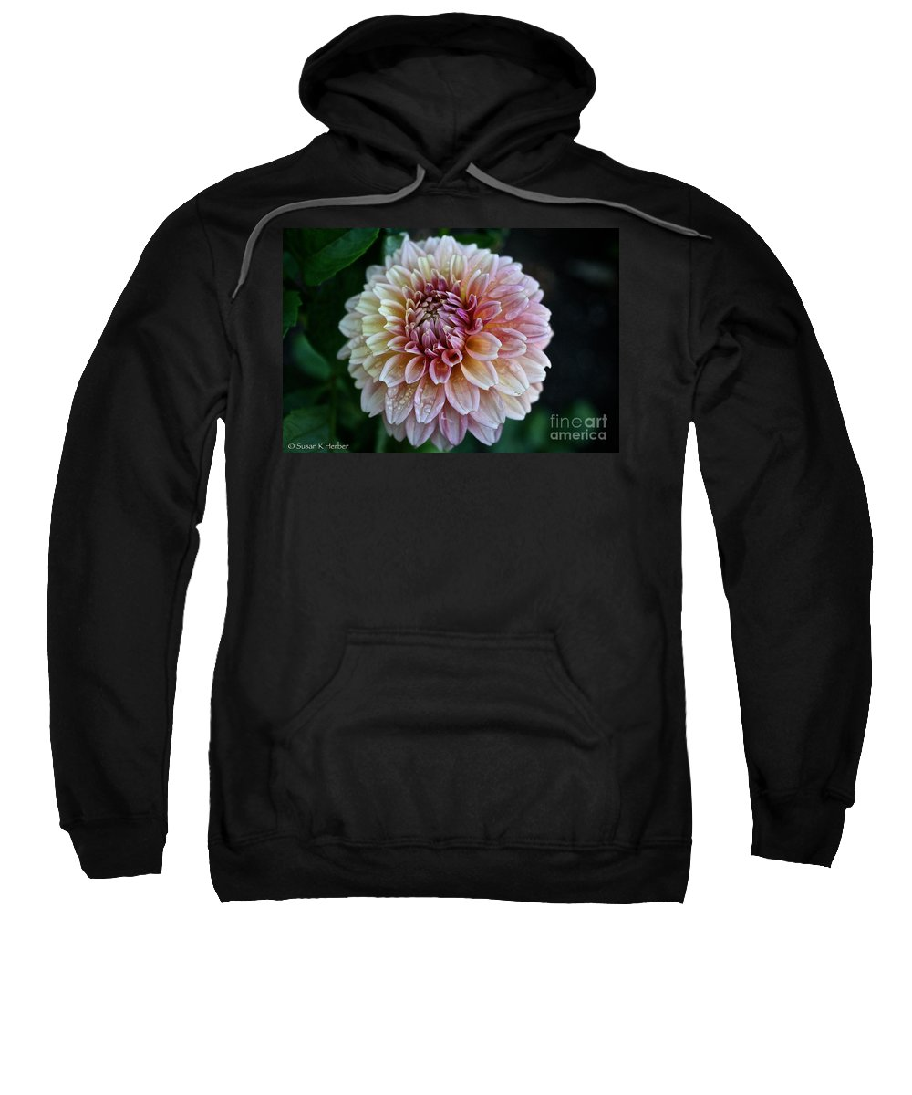 Plant Sweatshirt featuring the photograph Dahlia Dewdrops by Susan Herber