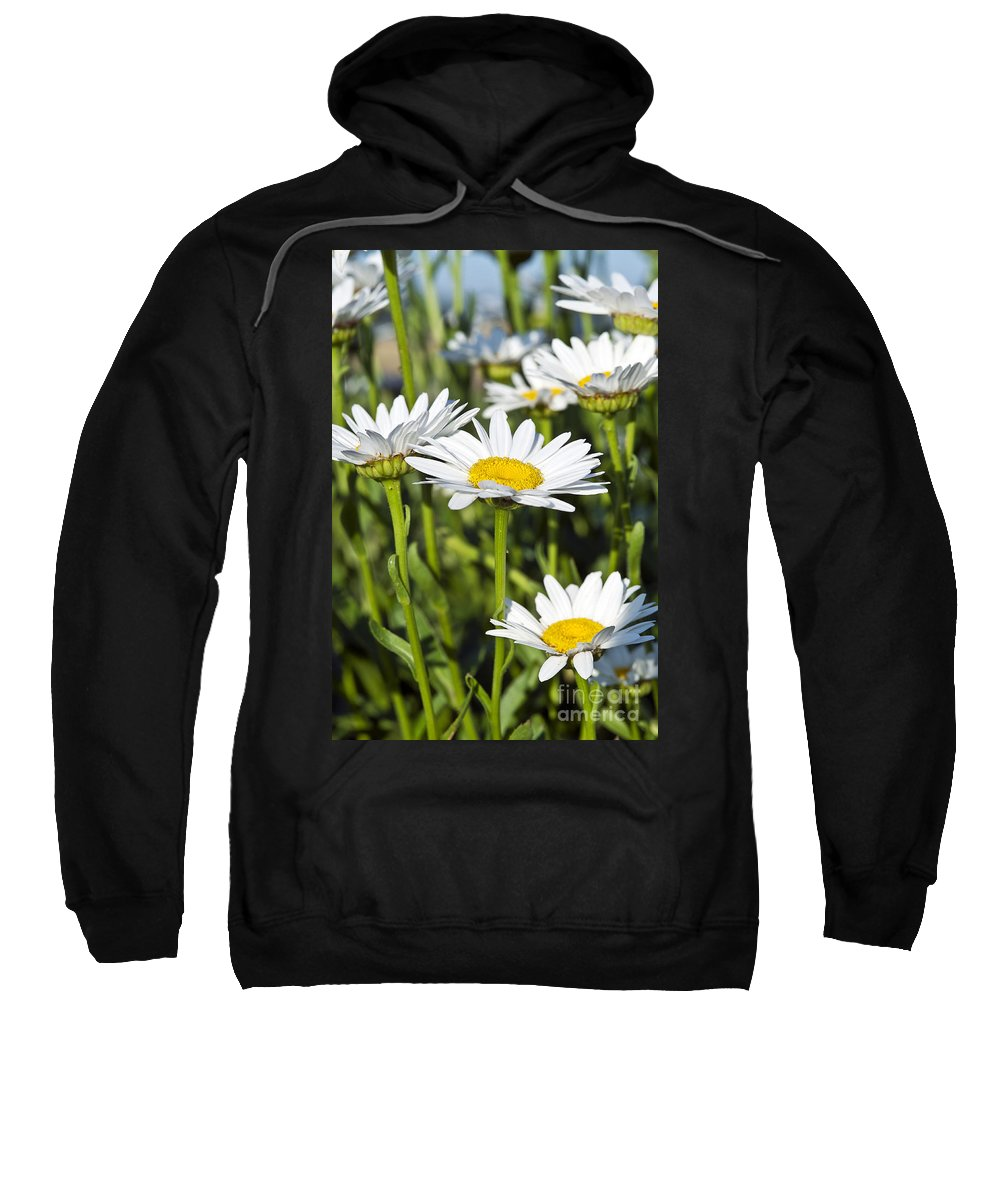 Bellis Perennis Sweatshirt featuring the photograph Daisies by John Greim