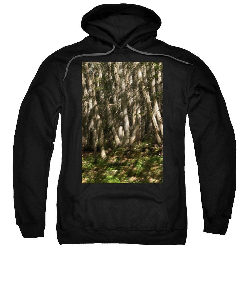 Nature Sweatshirt featuring the photograph Dancing Birches by Susan Capuano
