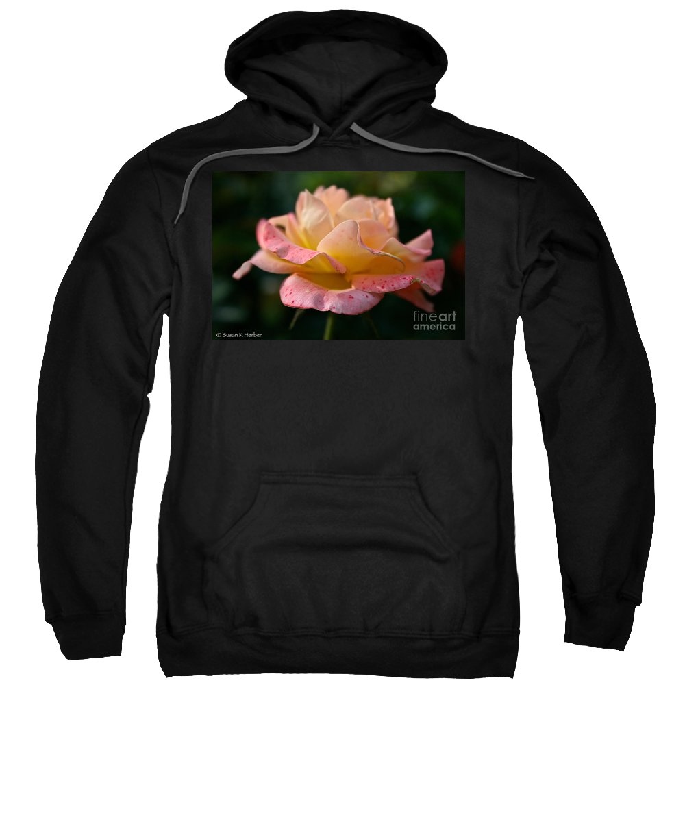 Plant Sweatshirt featuring the photograph Day Breaker Floribunda by Susan Herber