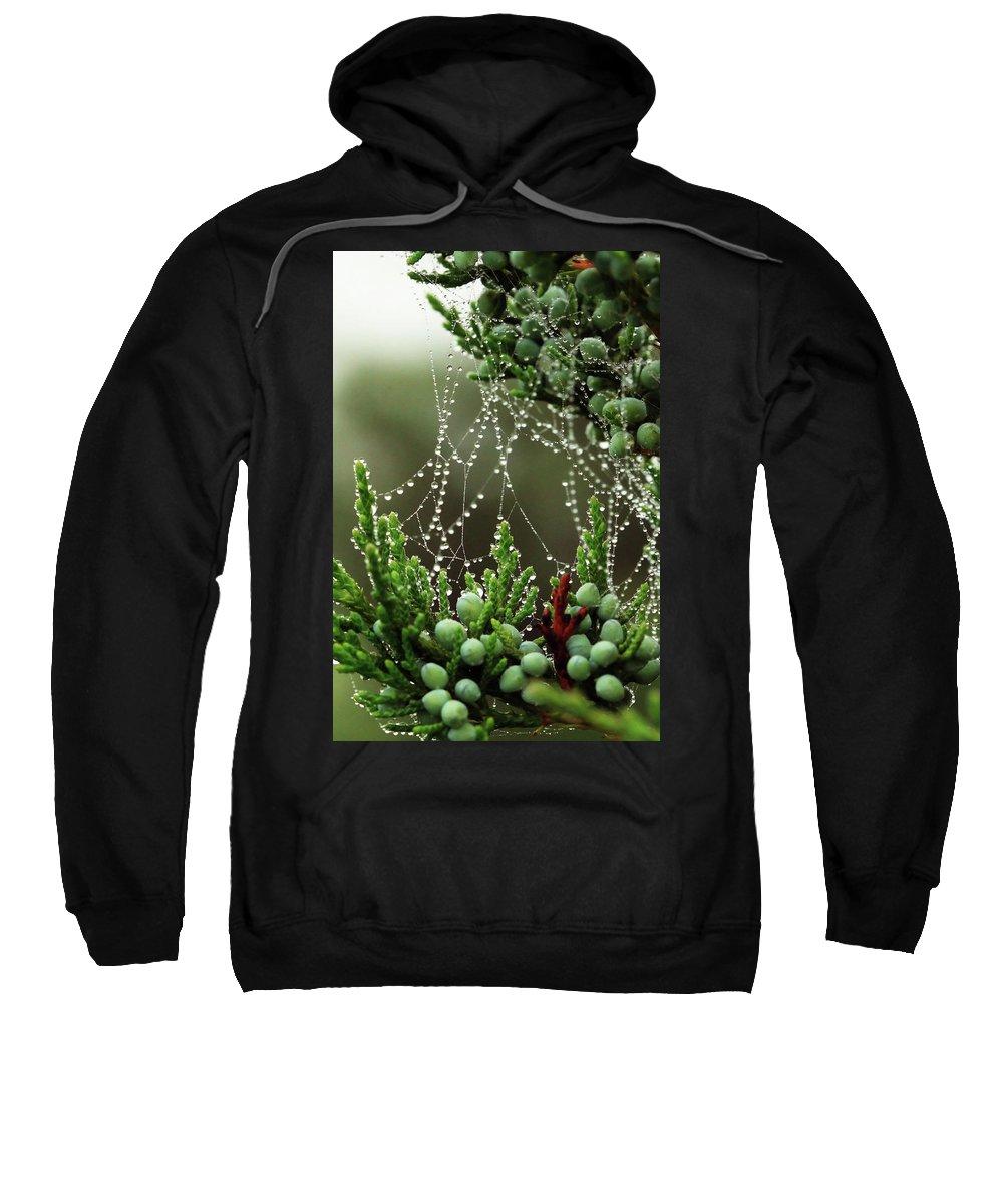Web Sweatshirt featuring the photograph Decorated Bush Quogue Wildlife Preserve by Rick Berk