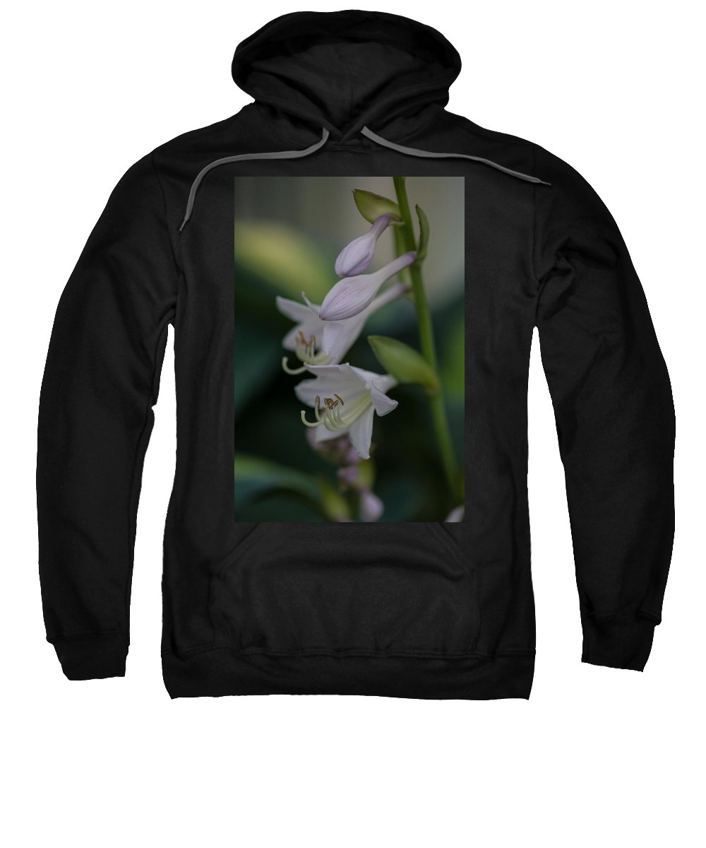 Flower Sweatshirt featuring the photograph Delicate Lillies by Mike Reid