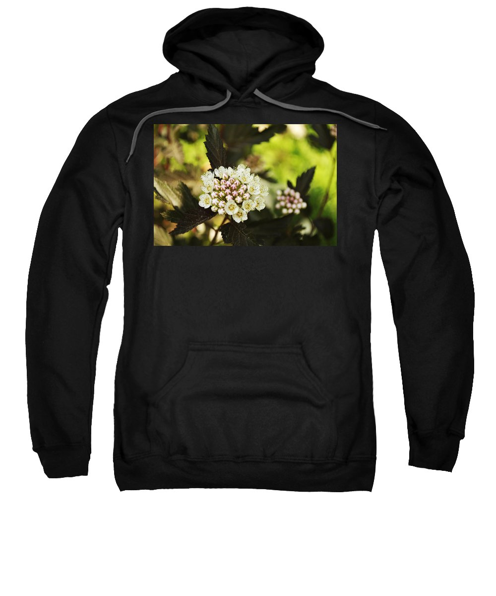 Spring Sweatshirt featuring the photograph Delicate Spring Bloom by Elaine Mikkelstrup