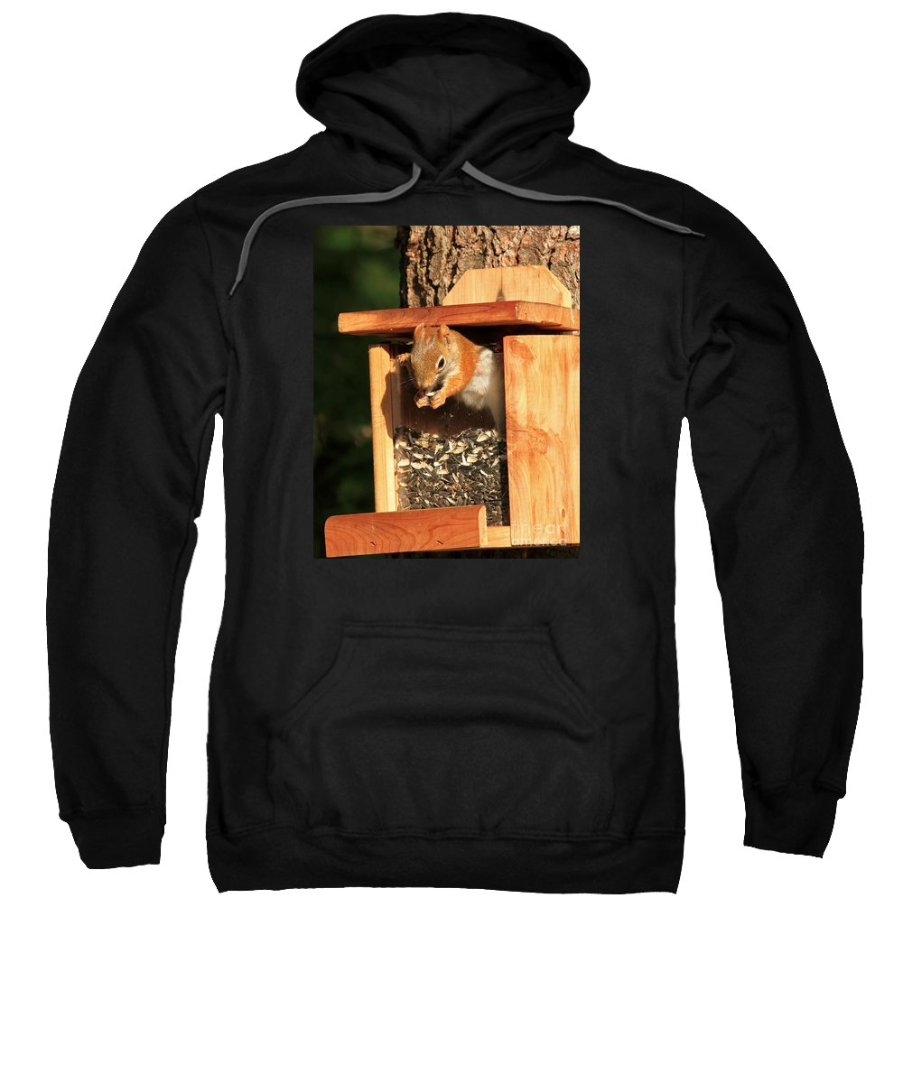 Squirrel Sweatshirt featuring the photograph Dine In Or Out by Lloyd Alexander