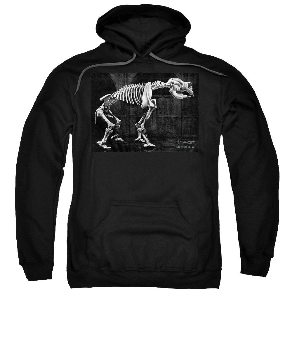 Prehistory Sweatshirt featuring the photograph Diprotodon, Cenozoic Mammal by Science Source