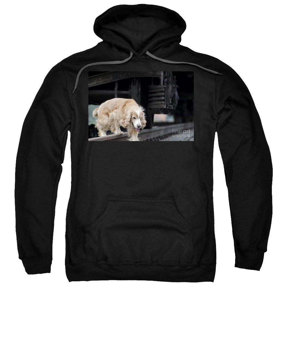 Dog Sweatshirt featuring the photograph Dog Walking Under A Train Wagon by Mats Silvan