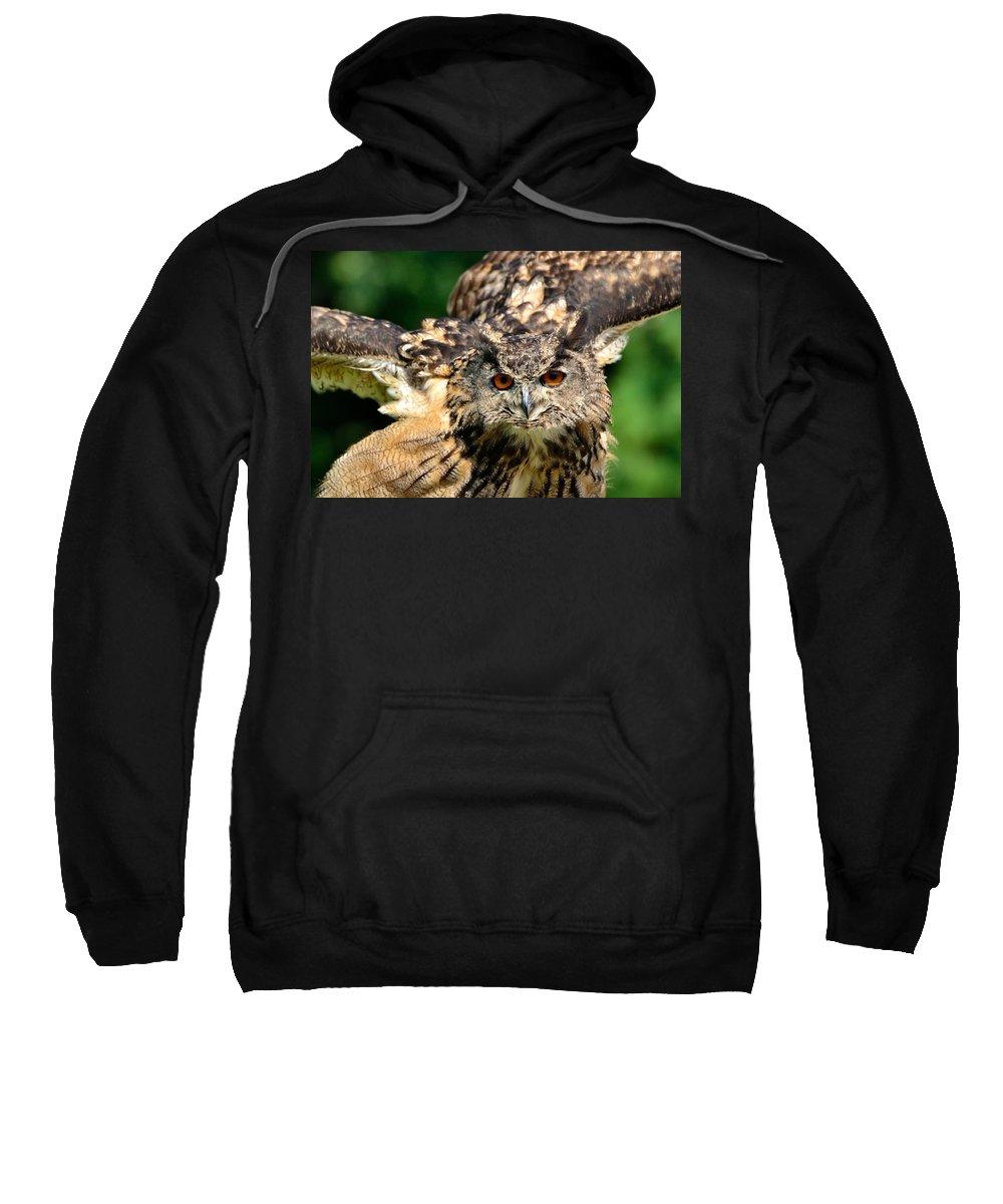 Bubo Bubo Sweatshirt featuring the photograph Eagle Owl by Joshua McCullough