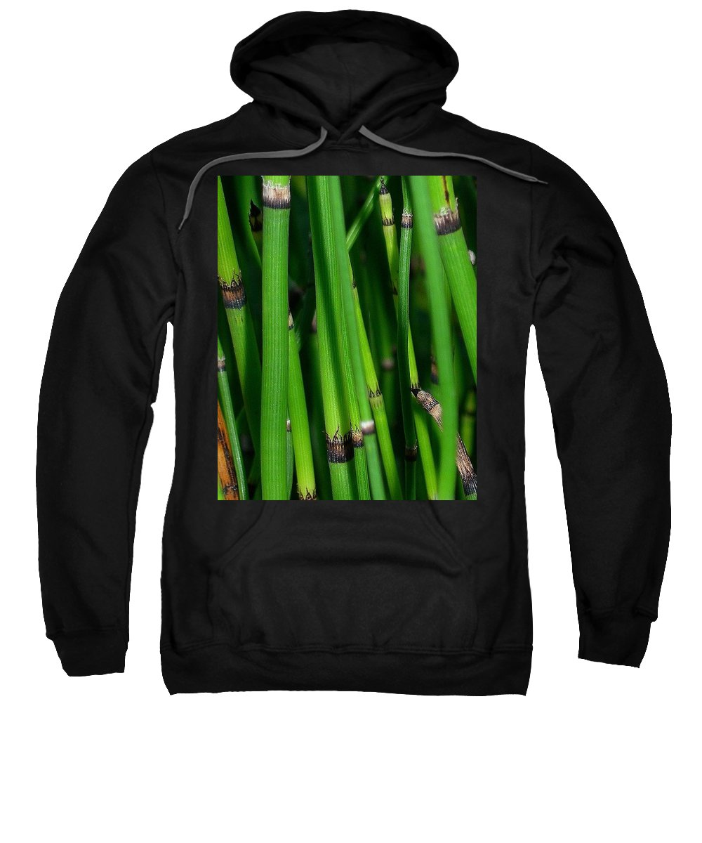 Horsetail Sweatshirt featuring the photograph Equisetum by Judi Bagwell