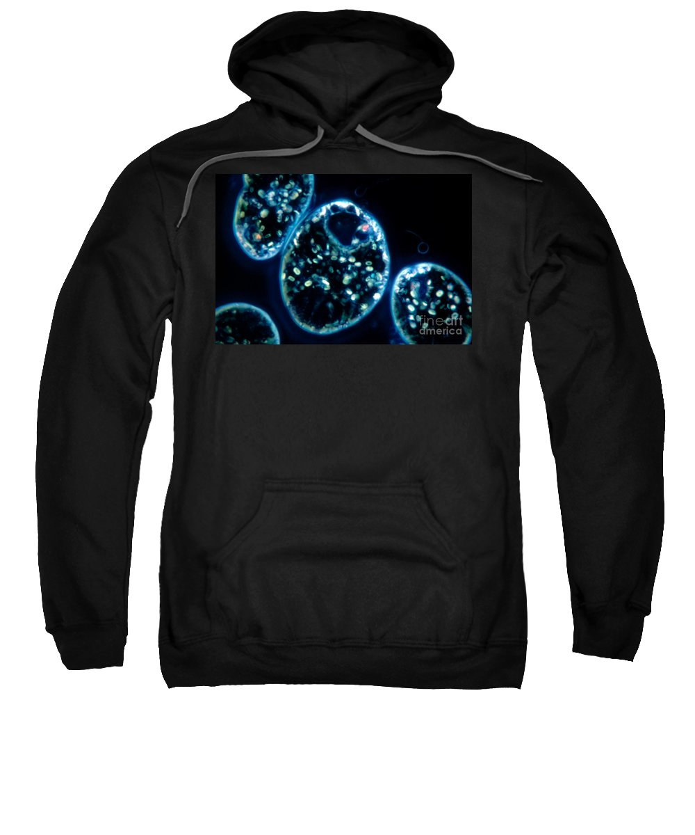 Euglena Viridis Sweatshirt featuring the photograph Euglena Viridis by M. I. Walker