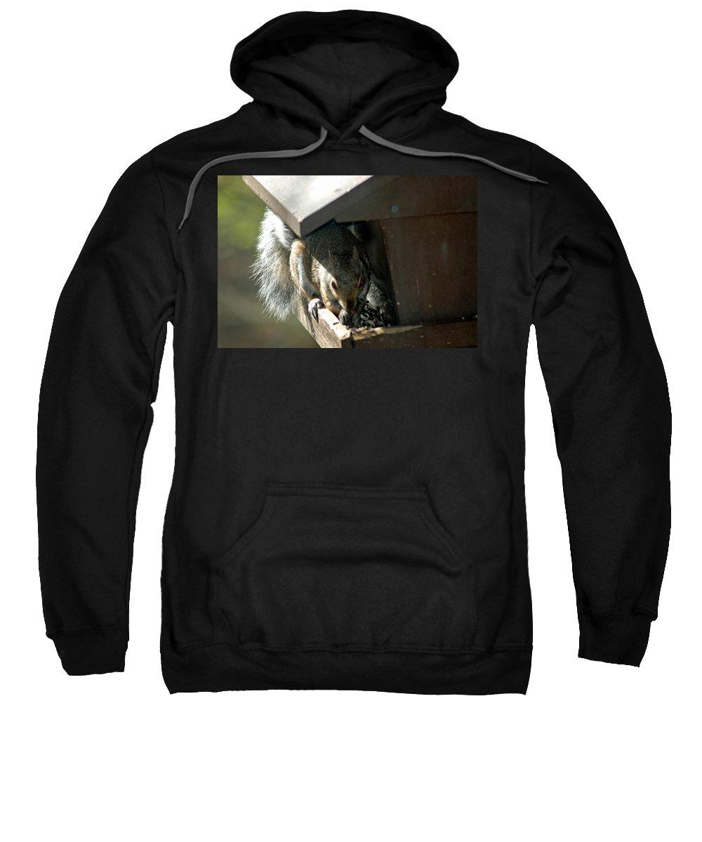 Usa Sweatshirt featuring the photograph Evil Rodent by LeeAnn McLaneGoetz McLaneGoetzStudioLLCcom