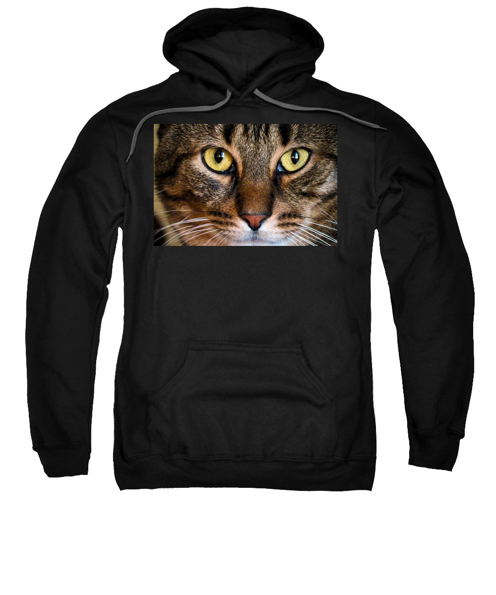 Cat Sweatshirt featuring the photograph Face Framed Feline by Art Dingo