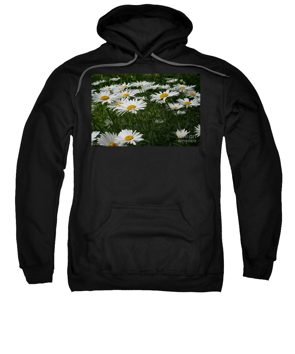 Minnesota Sweatshirt featuring the photograph Field Daisies by Susan Herber