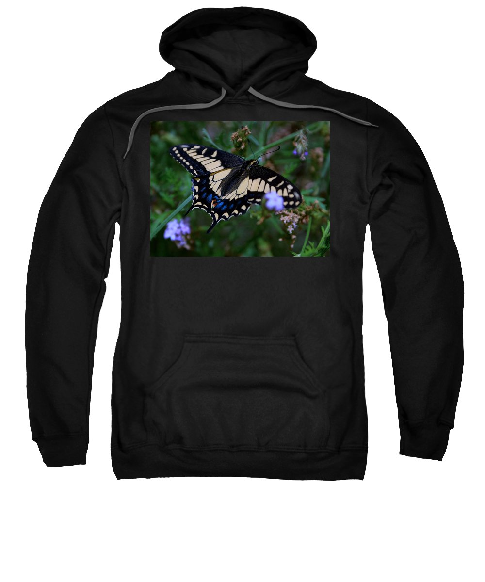 Butterfly Sweatshirt featuring the photograph Fly Butterfly Fly by Sumi Martin