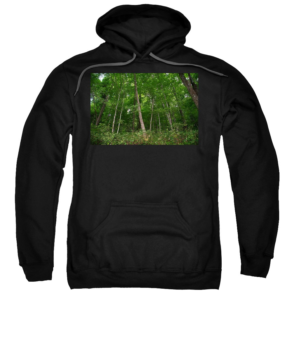 Forest Sweatshirt featuring the photograph Forest For The Trees by Megan Cohen