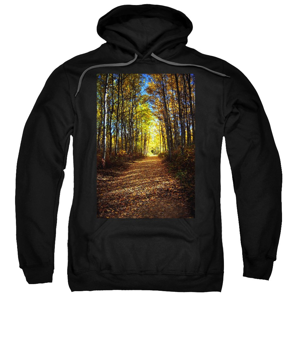 Autumn Sweatshirt featuring the photograph Forest Path In Autumn by Darren Greenwood
