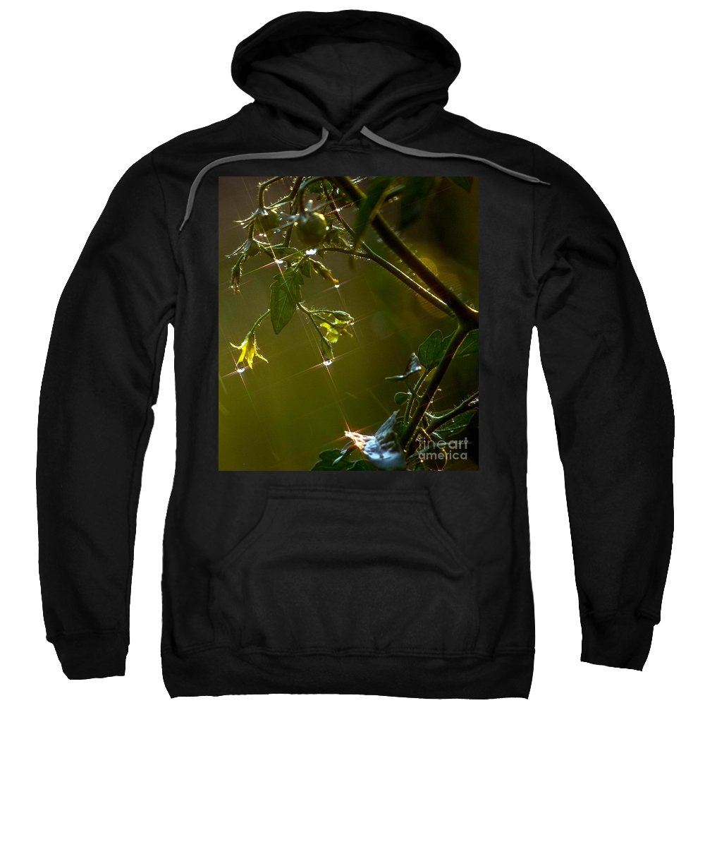Blossoms Sweatshirt featuring the photograph Freshly Showered Blossoms by Beth Phifer