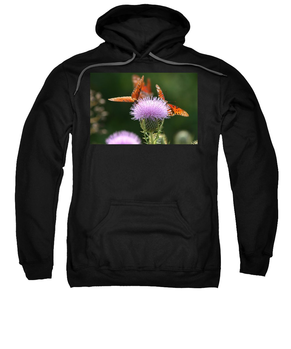 Euphydryas Aurinia Sweatshirt featuring the photograph Fritillary Wings And Thistles by Kathy Clark