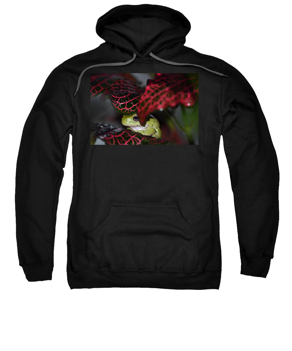 Frog Sweatshirt featuring the photograph Frog On A Leaf by Lori Tambakis