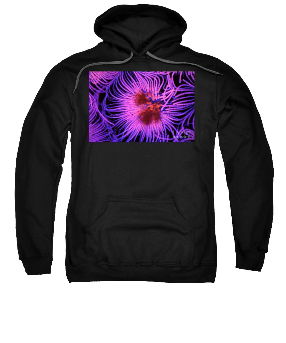 Light Microscopy Sweatshirt featuring the photograph Gleotrichia by M. I. Walker