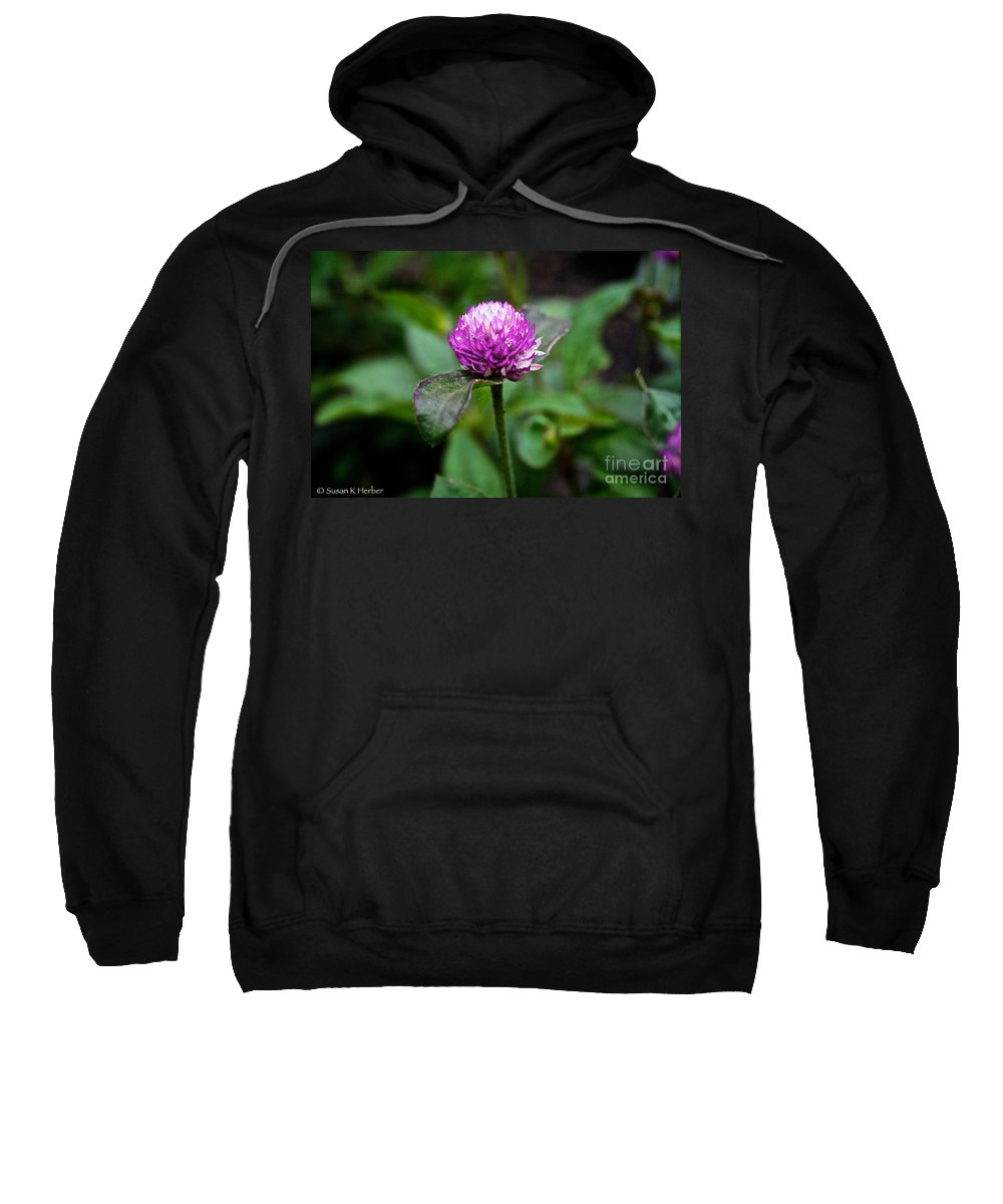 Floral Sweatshirt featuring the photograph Globe Amaranth Bicolor Rose by Susan Herber