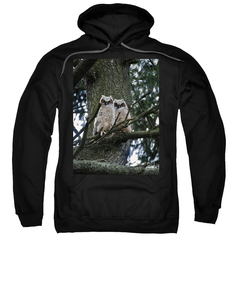 Great Horned Owl Sweatshirt featuring the photograph Great Horned Owls Young by John Greim