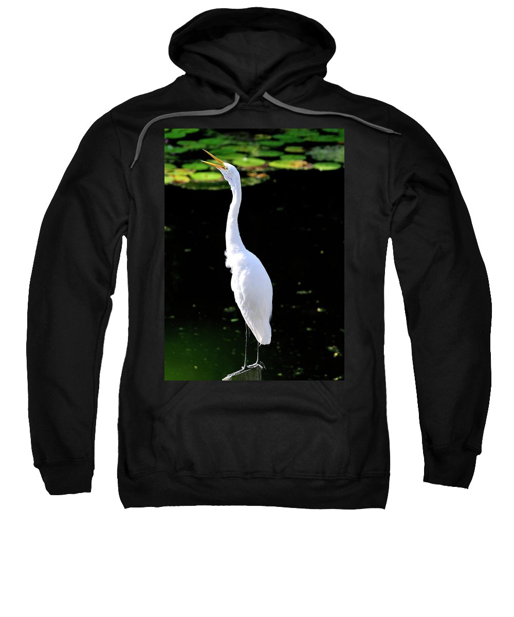 Great Sweatshirt featuring the photograph Great White Egret Singing In The Morning Light by Bill Dodsworth