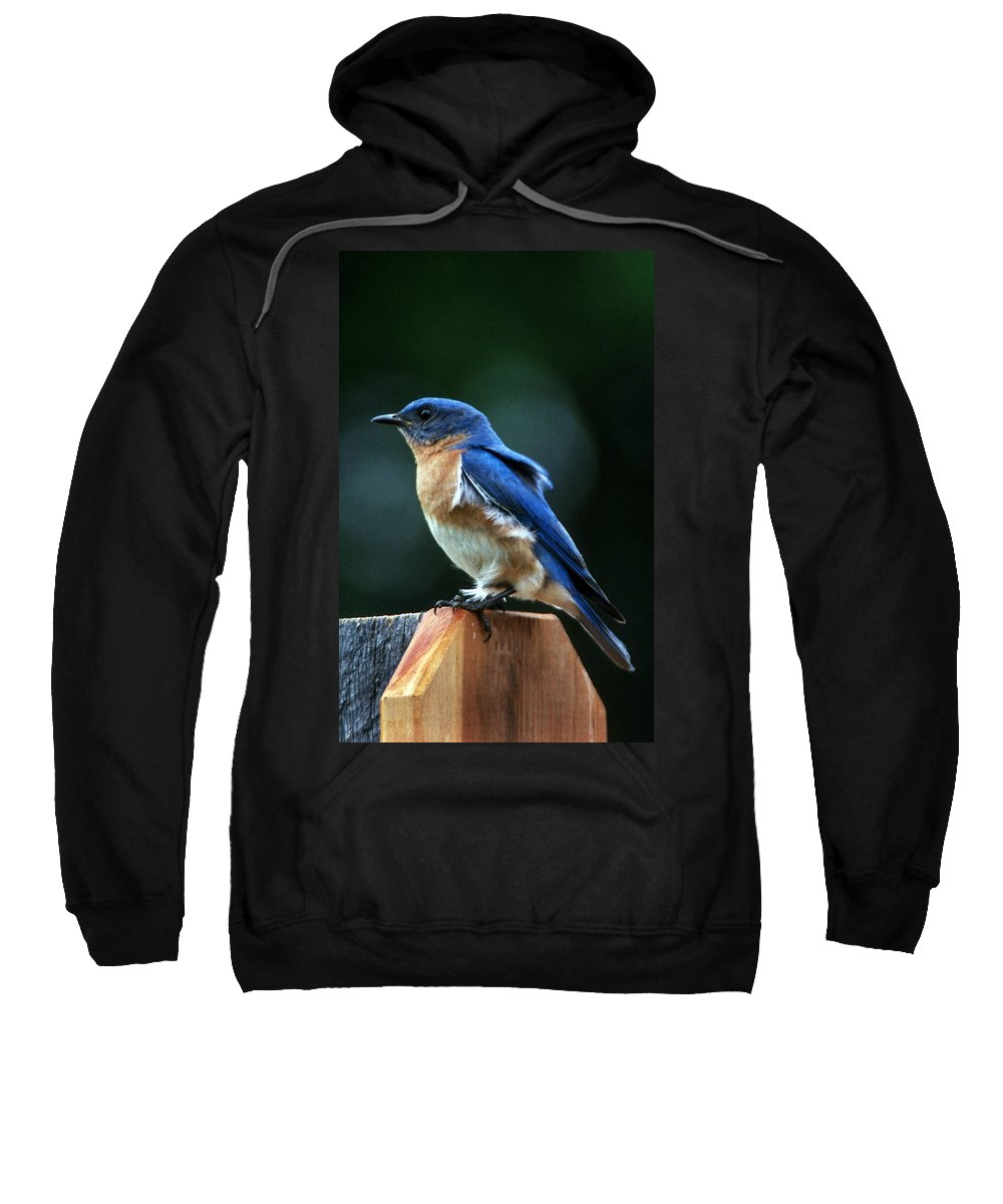 Bluebird Sweatshirt featuring the photograph Guard At Work by Skip Willits