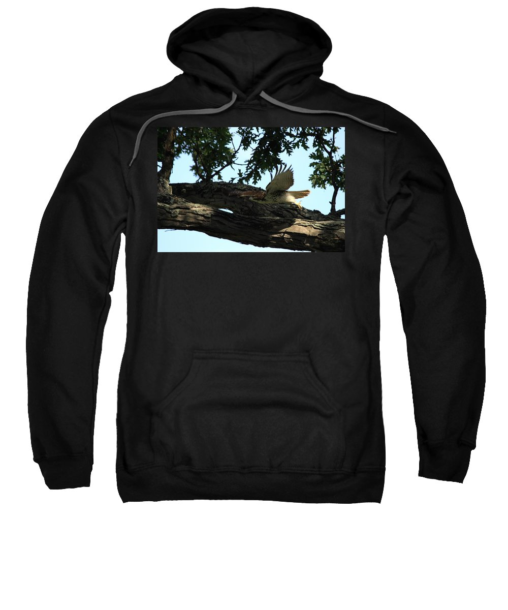 Bird Sweatshirt featuring the photograph Hawk On The Move by Dennis Pintoski