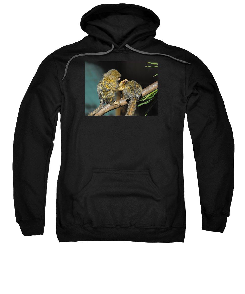 Pygmy Marmoset Sweatshirt featuring the photograph Helping Hand by Marlene Challis