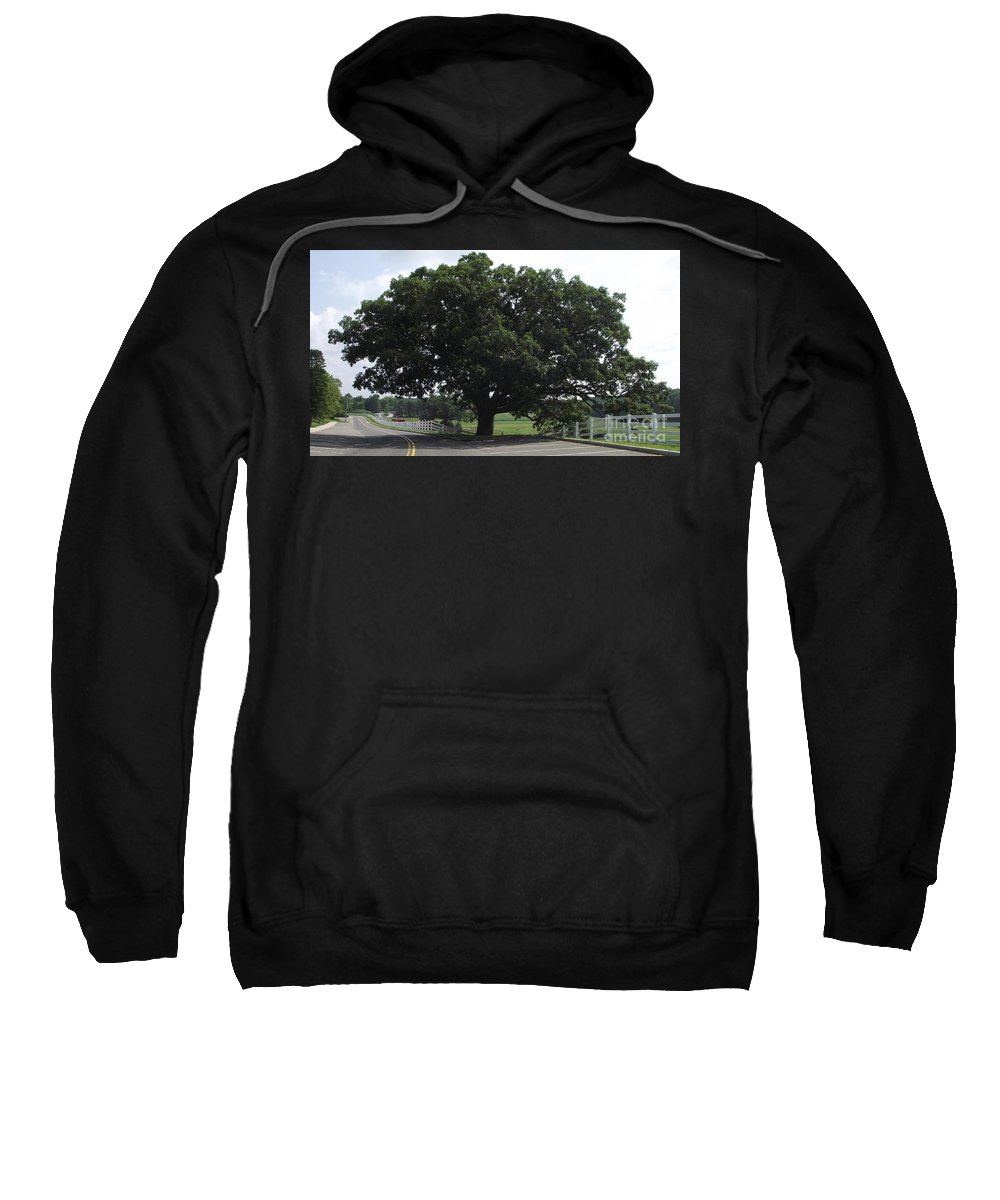 Giant Oak Tree Sweatshirt featuring the photograph Horse Barn Hill Uconn by Michelle Welles