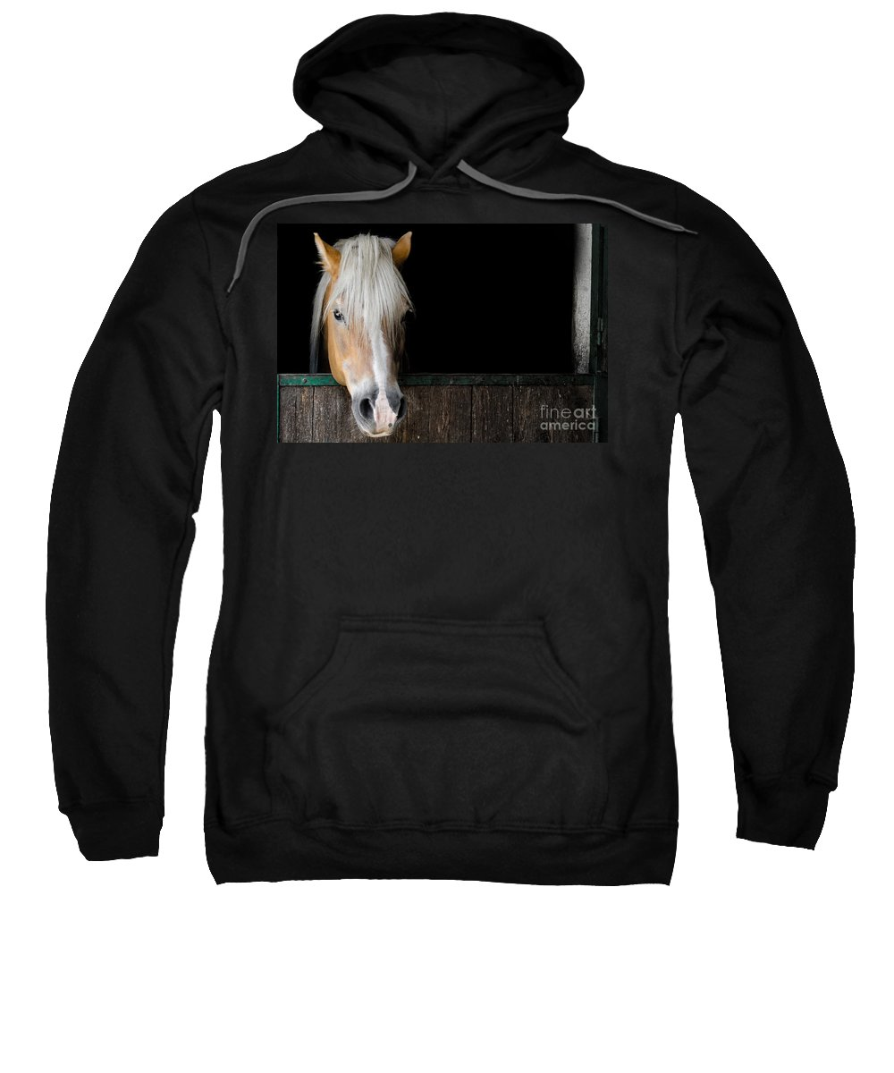 Horse Sweatshirt featuring the photograph Horse In The Stable by Mats Silvan
