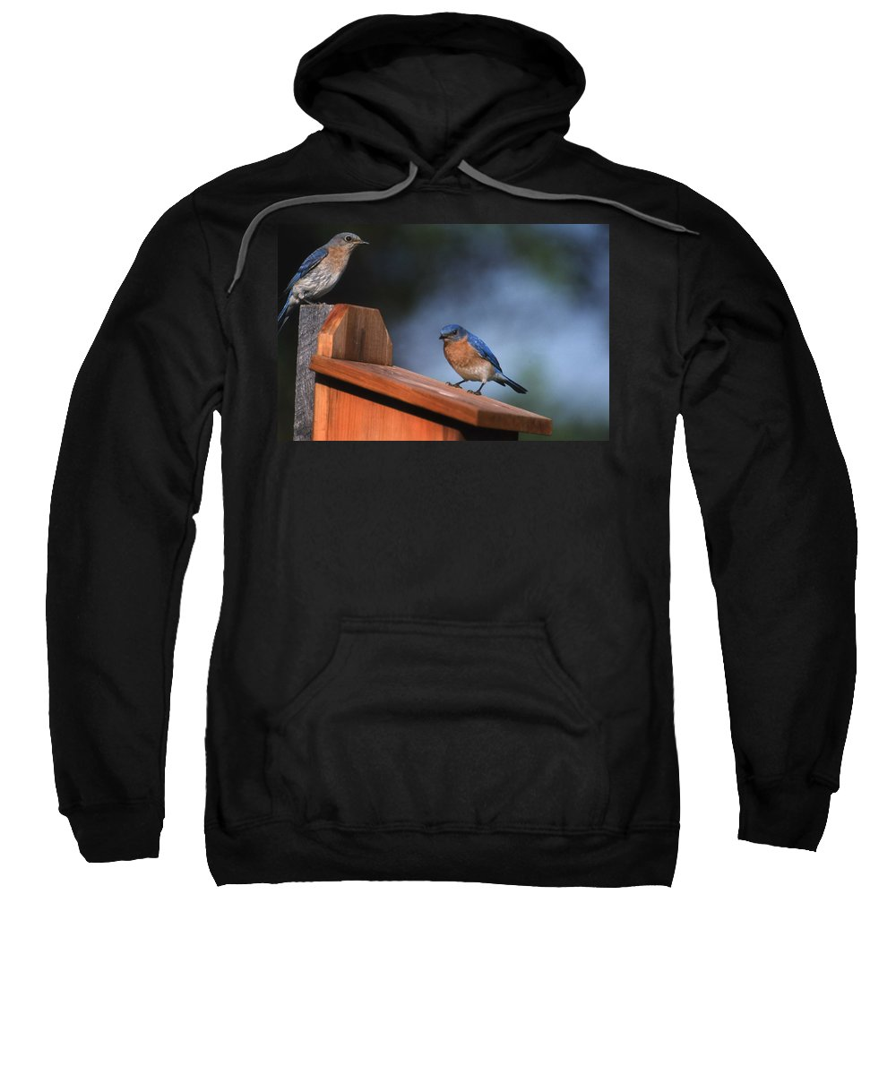 Blue Birds Sweatshirt featuring the photograph House Inspection by Skip Willits