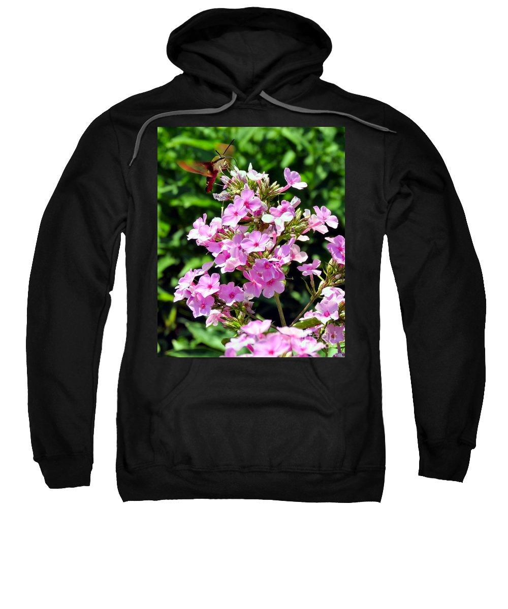 Moth Sweatshirt featuring the photograph Hummingbird Moth by Art Dingo