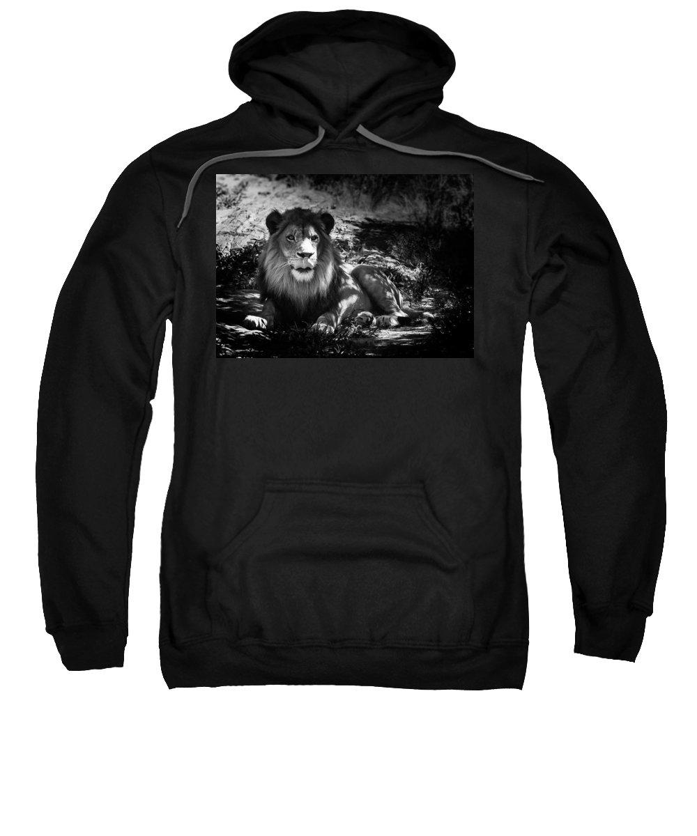 Lion Sweatshirt featuring the photograph Hungry Lion by Hakon Soreide